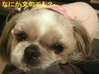 love_20080226_6