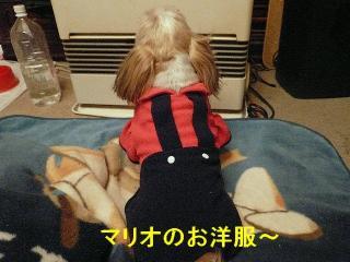bibi_20080301_1