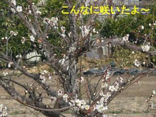hana_20080302_1