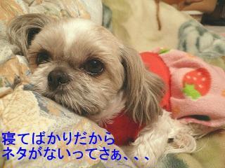 love_20080304_2