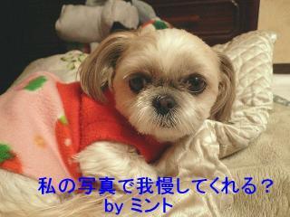 mint_20080304_1