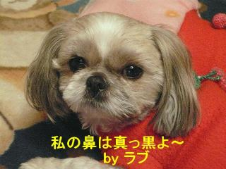 love_20080306_1