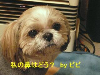 bibi_20080306_1