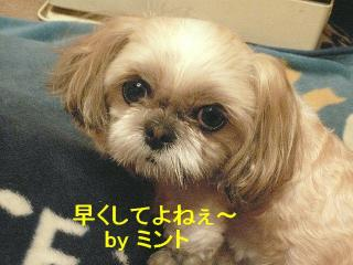 mint_20080308_3