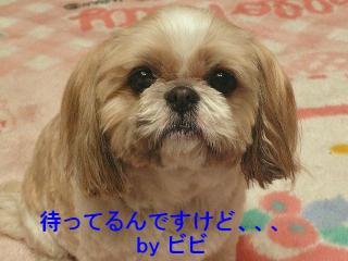 bibi_20080308_1