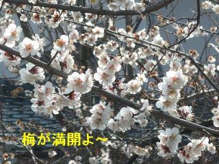 hana_20080309_1