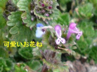 hana_20080309_3