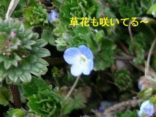 hana_20080309_2