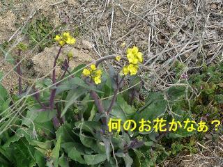 hana_20080309_4