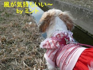 mint_20080309_3