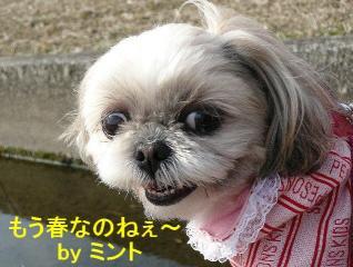 mint_20080309_2