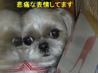 mint_20080310_2