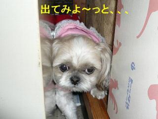 mint_20080310_4