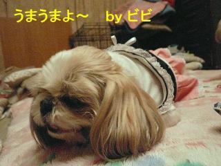 bibi_20080311_1