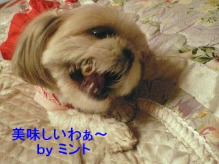 mint_20080311_1