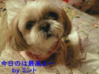 mint_20080311_2