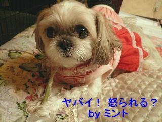 mint_20080311_6