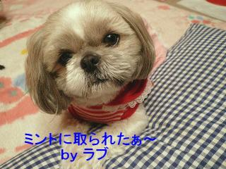 love_20080311_3