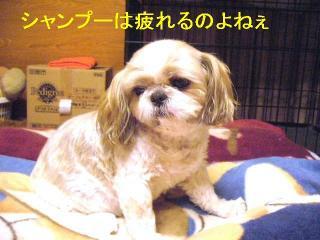 bibi_20060530_1