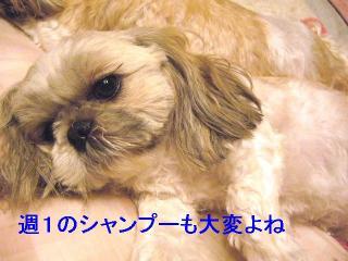 love_20060530_1