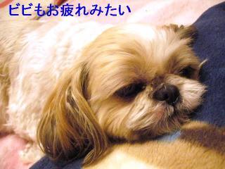 bibi_20060530_2
