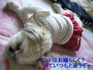 mint_20060521_3