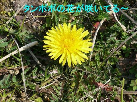 hana_20080316_2