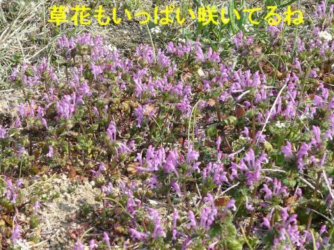 hana_20080316_3