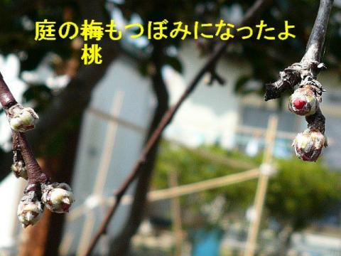 hana_20080316_5