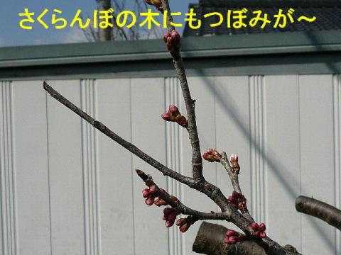 hana_20080316_6