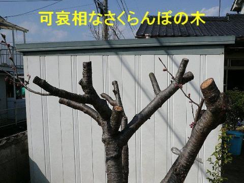 hana_20080316_7