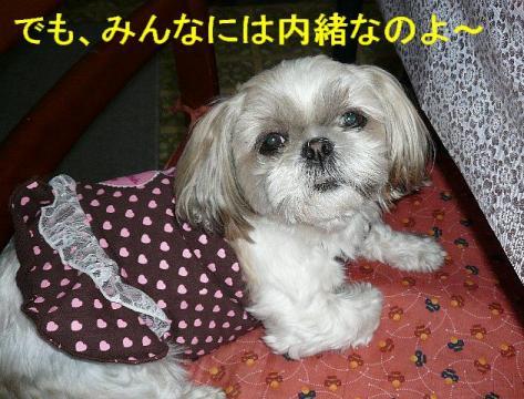 mint_20080317_7