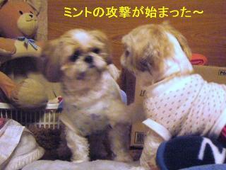 bibimint_20060607_2