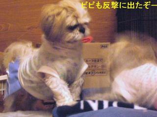 bibimint_20060607_4