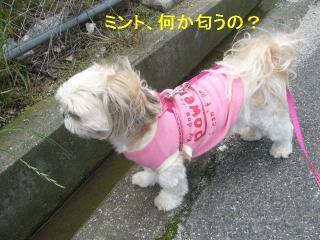 mint_20060528_1