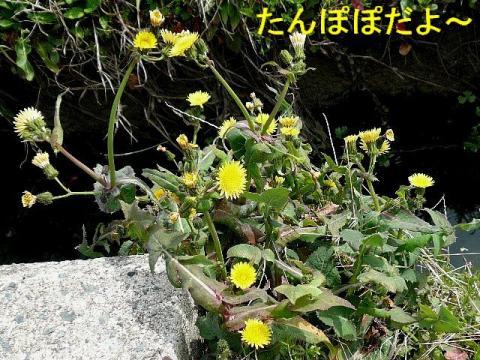 hana_20080322_1