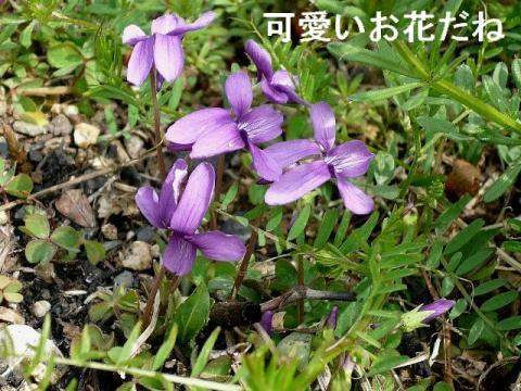 hana_20080322_2