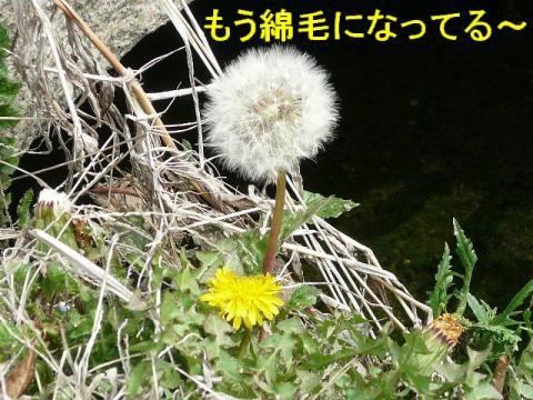 hana_20080322_4