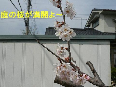 hana_20080322_6