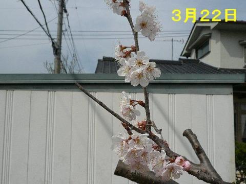 hana_20080322_10