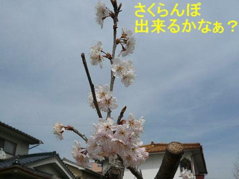 hana_20080322_7