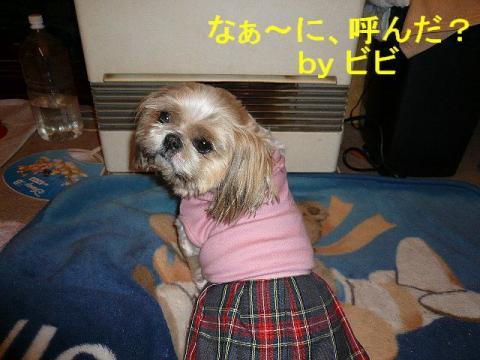 bibi_20080324_2