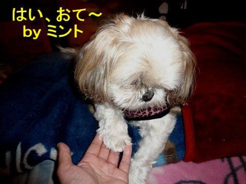 mint_20080325_2