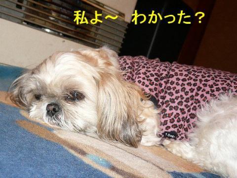 mint_20080326_3