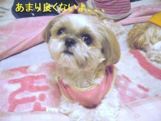 mint_20060603_1