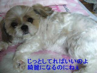 bibi_20060604_1
