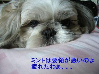 love_20060604_2