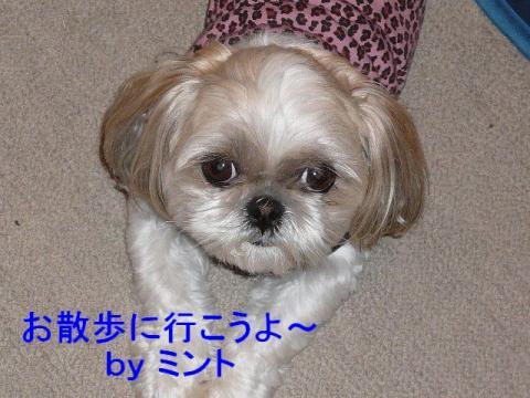 mint_20080327_4