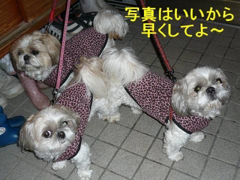 oyako_20080327_2