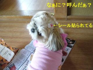 mint_20060606_2